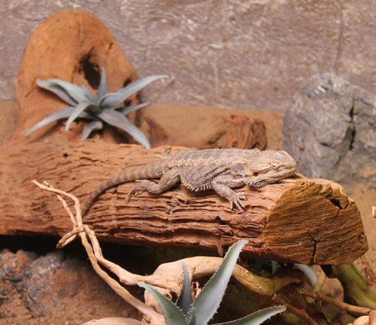 Checkliste für die Haltung von Reptilien